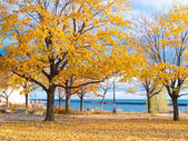 Autumn trees — Stock Photo