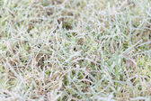 Dew drops on grass — Stock Photo