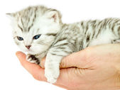 Young cat lying on a hand — Stock Photo