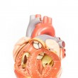 Human heart model front view — Stock Photo