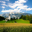 Fresh green grass in Alpine fields surrounding a small village with a nice church. — Stock Photo #31553157