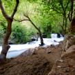 Khurmal Forrest in mountains of autonomous Kurdistan region near Iran — Stock Photo