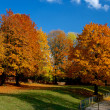 Yellow and red leafs on trees in autumn, october — Stock Photo #33296829
