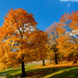 Yellow and red leafs on trees in autumn, october — Stock Photo #33296831