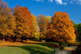 Yellow and red leafs on trees in autumn, october — Stock Photo