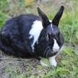 Stockfoto: Rabbit in grass