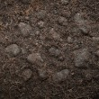 Loose Soil Organic For Plant — Stock Photo