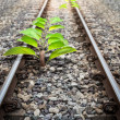 Origin Tree in Railroad — Stock Photo #34702907