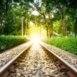 Railroad Transit the Park — Stock Photo