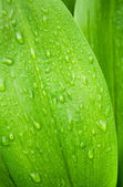 Beautiful Green Leaf With Drop — Stock Photo