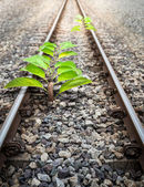 Origin Tree in Railroad — Stock Photo