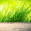Clump of Green Grass — Stock Photo