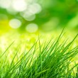 Clump of Grass — Stock Photo