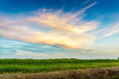 Green Meadow and Beautiful Sky — Stock Photo