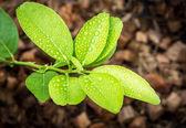 Raindrop on Green Leaf — Stock Photo