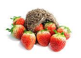 Strawberries Fruit — Stock Photo