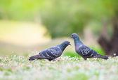 Beautiful couple bird — Stock Photo