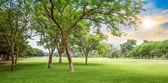 árbol en el campo de golf — Foto de Stock