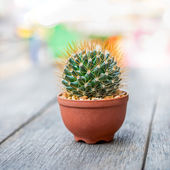 Circular cactus — Stock Photo