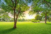 árvore no campo de golfe — Foto Stock