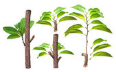 Branch and green leaf — Stock Photo