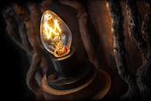 Light bulb — Photo