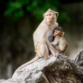 Little monkey and mom — Stock Photo