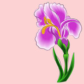 Iris on a pink background — Stock Vector