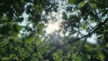 Faithful Sunshine through the Leaves — Stock Video
