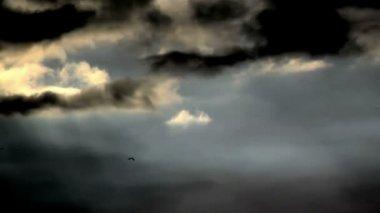 Birds Fly in Rays of Sun — Stock Video