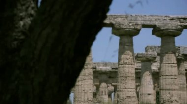 Revealing an Ancient Greek Temple from behind a Tree — Stock Video