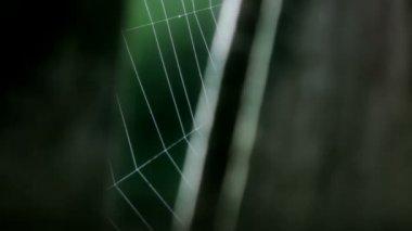 Cobweb Trembling in Wooden Frame — Stock Video