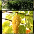 White wine collage — Stock Video