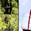 Stock Video: Vines and wine