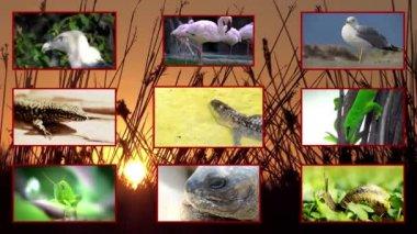 Wildlife, composition — Stock Video