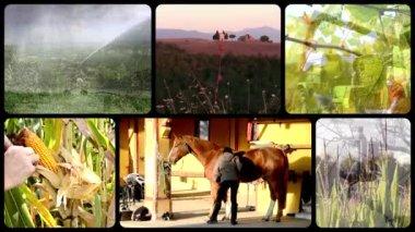 Farming — Vídeo Stock