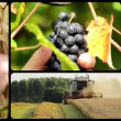 The harvest, collage — Stock Video #36863983