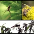 Insects, montage — Stock Video