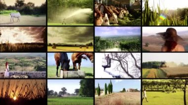 Colagem de agricultura — Vídeo Stock