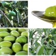 Olive oil collage — Stock Video #38875697
