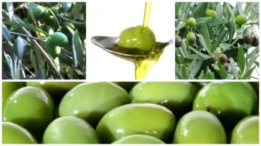 Olive oil collage — Stock Video