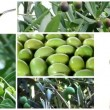 Olive oil collage — Stock Video #38880059