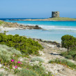 Stock Photo: Italy. Sardinia. Stintino seascape.