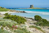 Italy. Sardinia. Stintino seascape. — Stock Photo