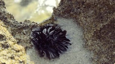 Sea urchin — Стоковое видео