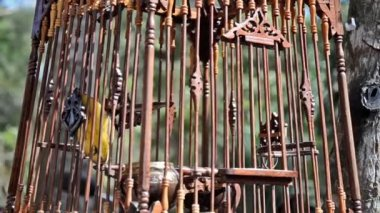 Bird in a cage — Stock Video