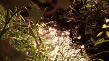 Irrigation canal — Stock Video