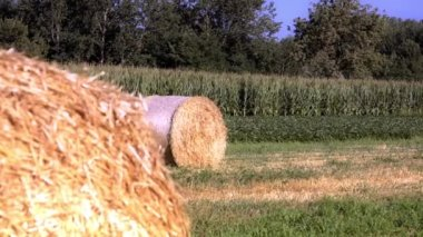 Hay bales — Stock Video