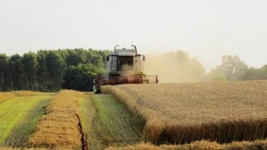 Agriculture, combine harvester — Stok video