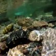 Underwater camera in mountain stream — Stock Video #48650009